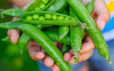 Summertime: The Perfect Time to Get Your Kids to Eat Their Veggies