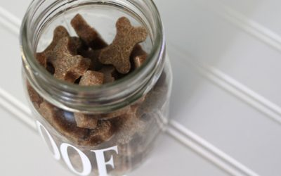 DIY Dog Treat Container