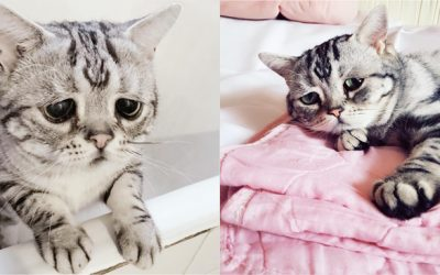 Luhu The World's Saddest Cat