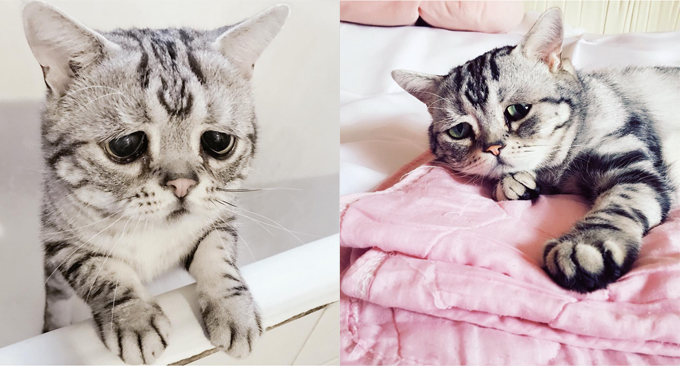 This Is Luhu, The World's Saddest Cat