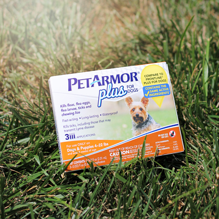 PetAmor Plus