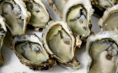 Oysters Can Be Used to Treat Anxiety & Depression