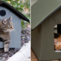 Insulated and Heated Outdoor Cat House