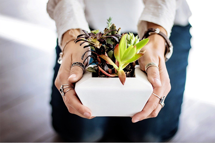 7 Critical Things I've Learned About Growing Succulents