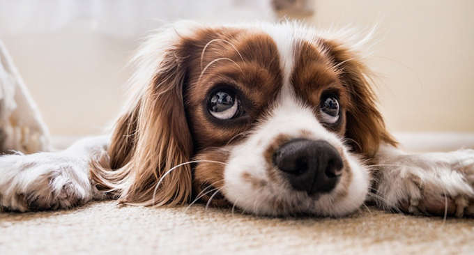 Weird Dog Behavior Explained by Experts