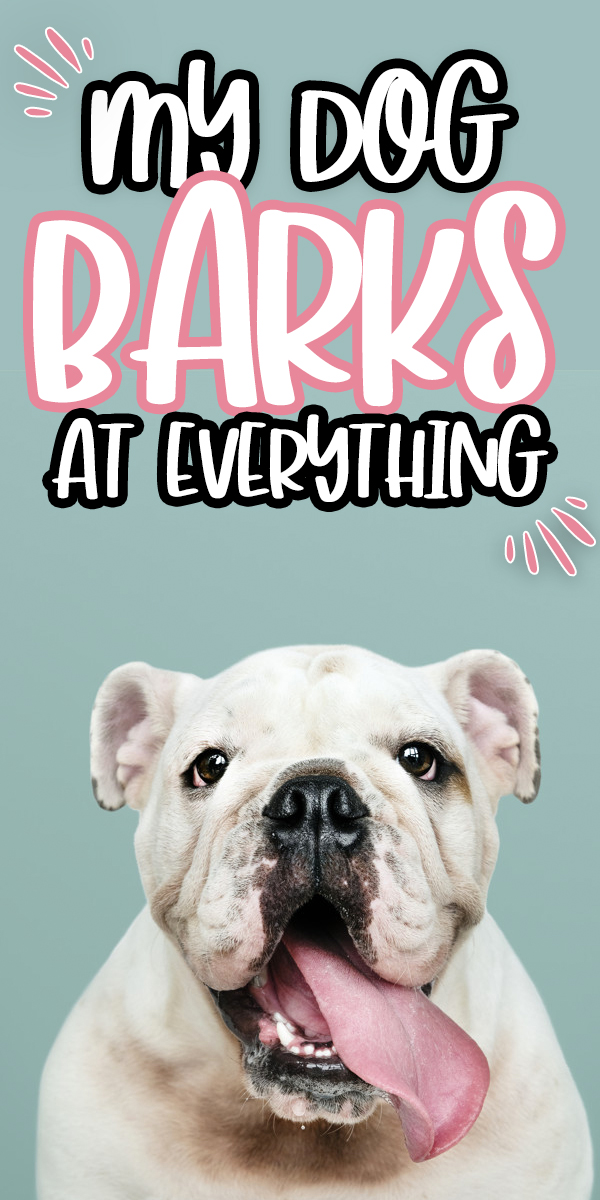 My Dog Barks At Everything. How I got my dog to finally stop barking.